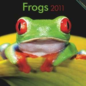 2011 Animal Calendars Frogs   12 Month   30x30cm